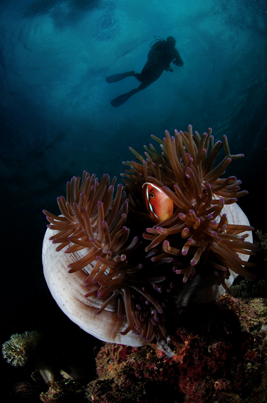 Philippines Siren Central Visayas diving-4