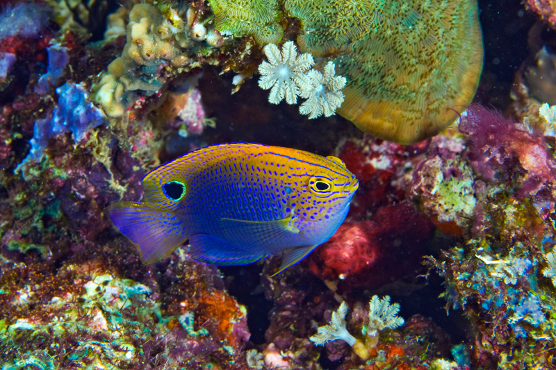 Philippines Siren Central Visayas diving-6