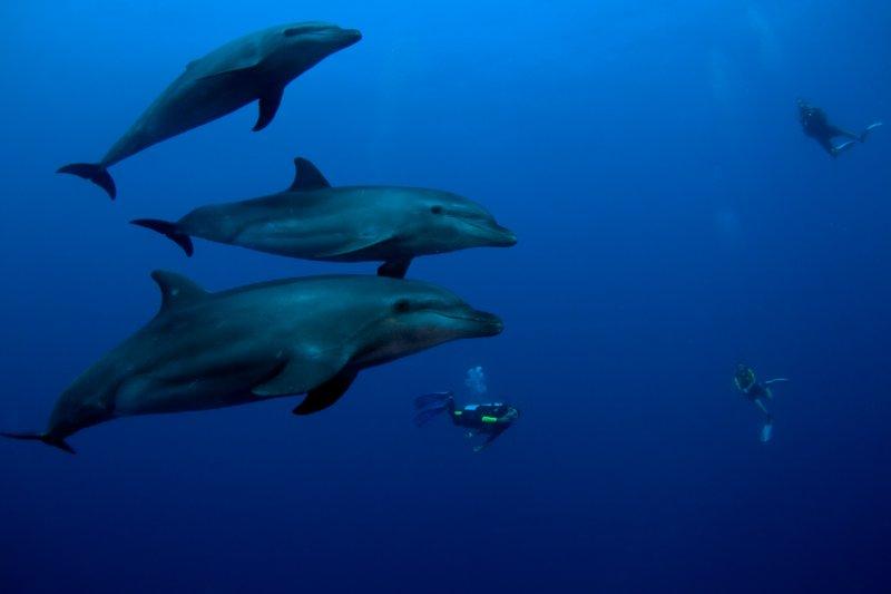 dauphins-7961