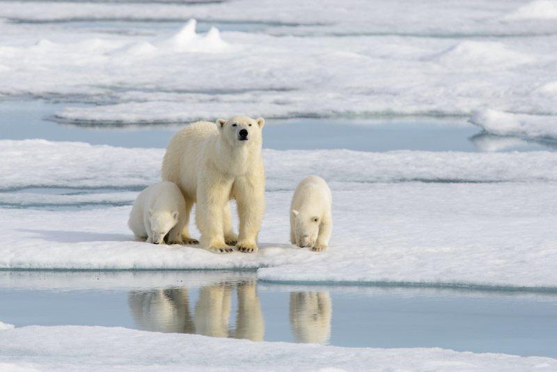 Aexey Sedov_20160722-ALX-Polar Bear4