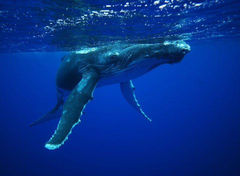Baleineau 2