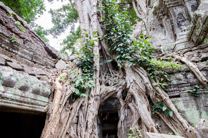 Cambodia Temples of Angkor -10