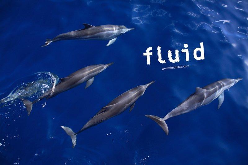 Dauphins Fluid 1