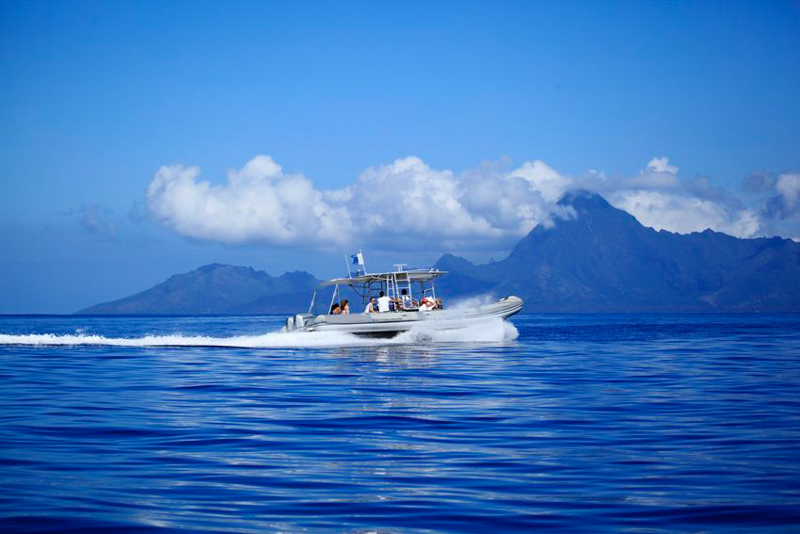 Fluid Tahiti