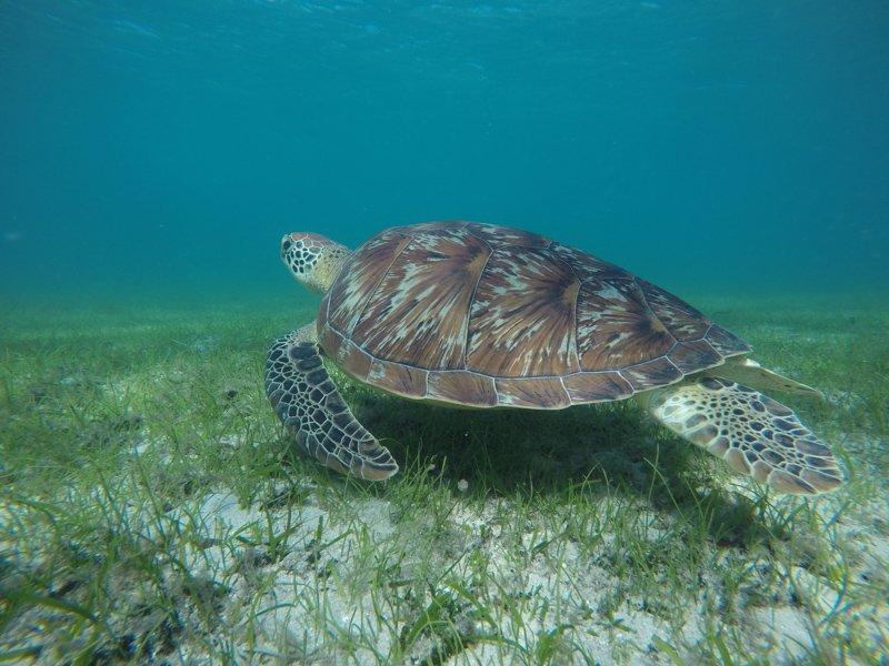 Turtle Green (1)