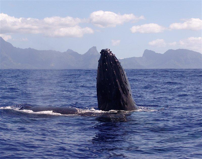 baleine14